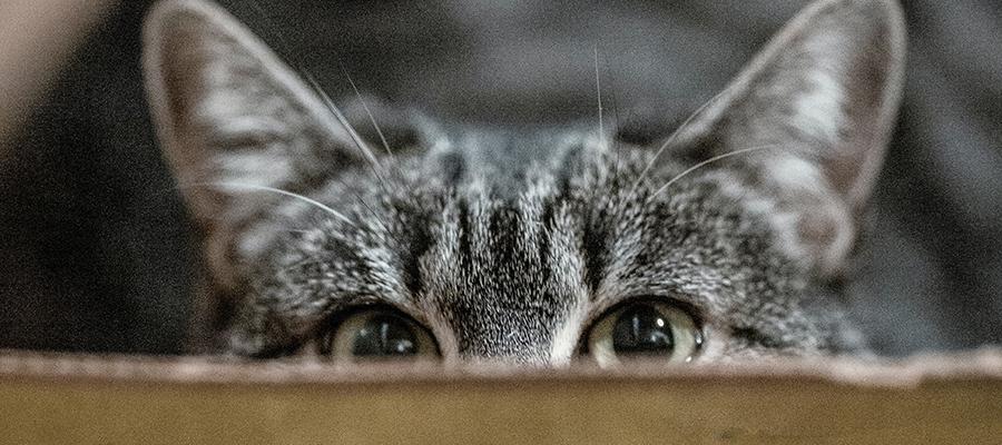 Chat tigré dans une boîte