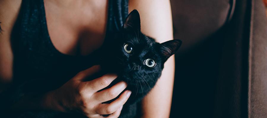 Chat noir dans les bras d'une femme