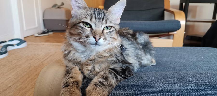 Chat tigré allongé sur une chaise