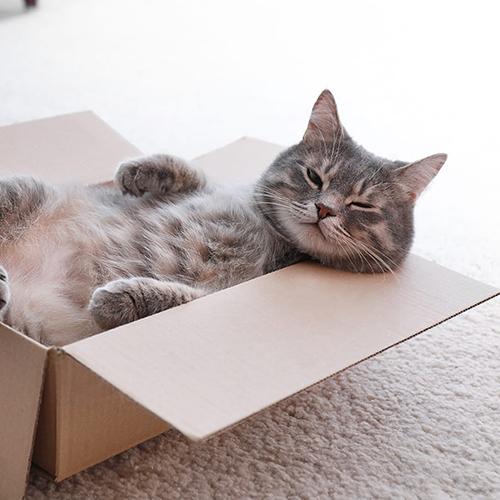 Chat tigré satisfait