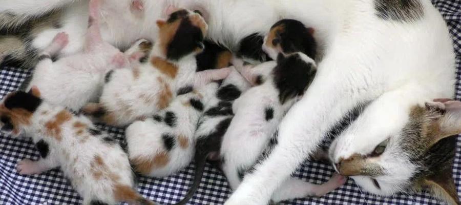 Chatte blanche et ses petits