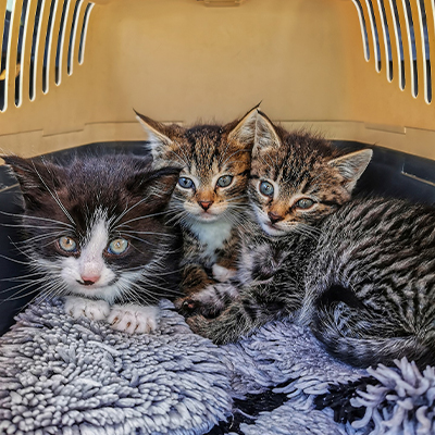 Chatons grande cage transport