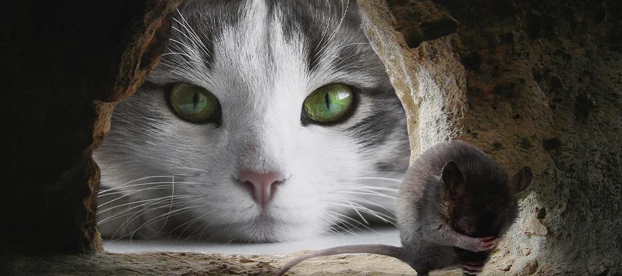 Chat qui regarde une souris par son trou