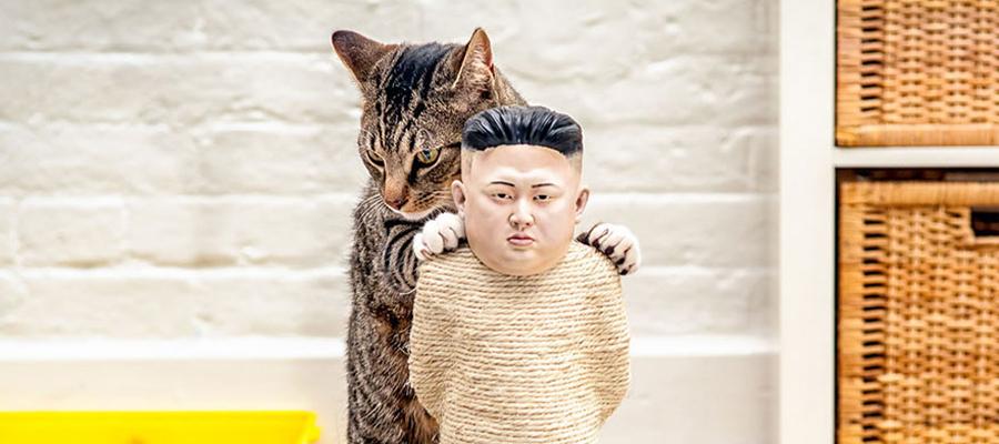 Chat qui griffe un griffoir Kim Jong-un