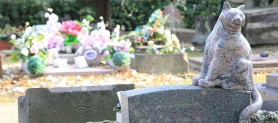 Urnes funéraires avec un chat sculpté