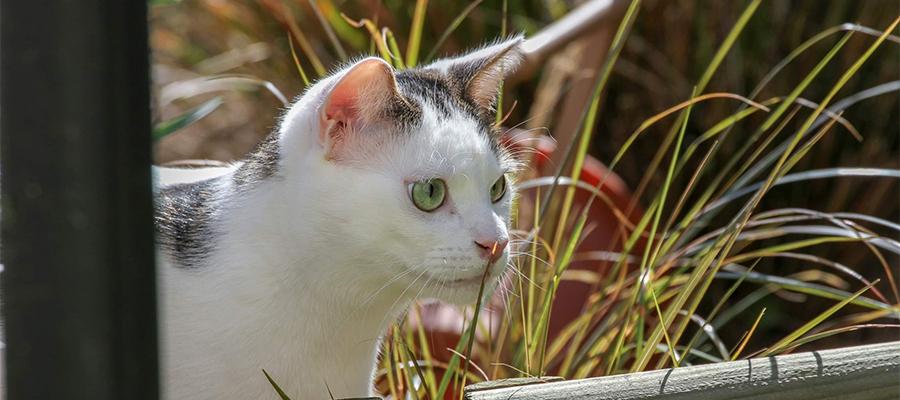 Chat blanc dans un jardin