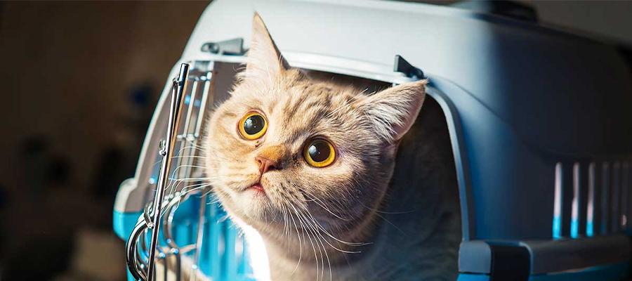Tête chat qui sort de sa cage