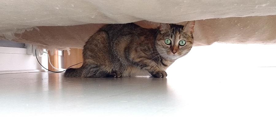 Chat sous un lit