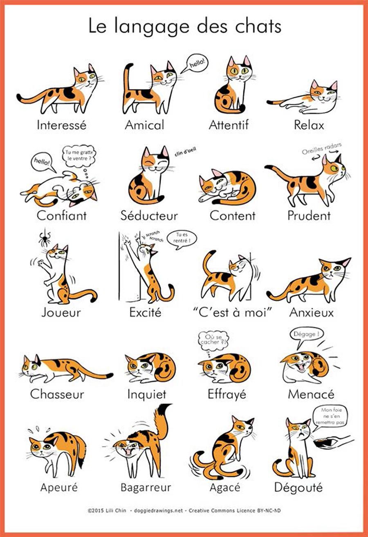 Une image explicative pour comprendre l'attitude du chat