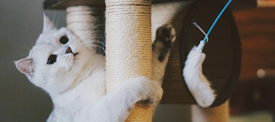 Un chat blanc entrain de jouer sur son arbre à chat