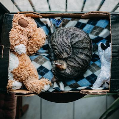 Chat boîte en carton