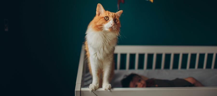 Un bébé dans son lit avec un chat roux près de lui