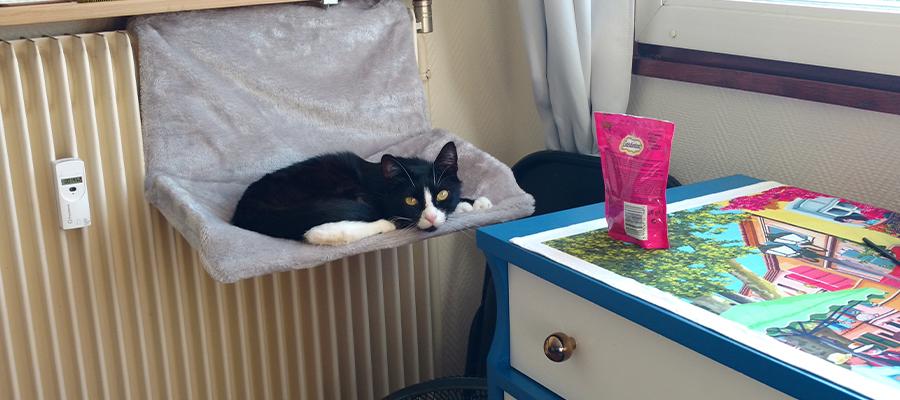 Chat allongé dans un hamac de radiateur