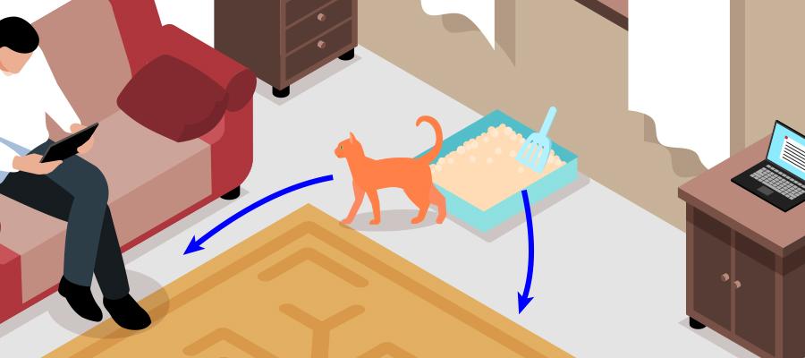 Issues de secours litière chat