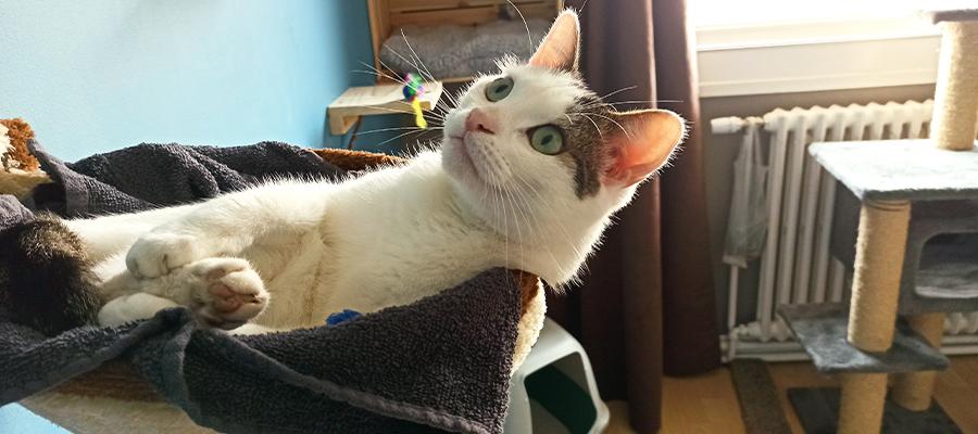 Chat blanc dans un panier