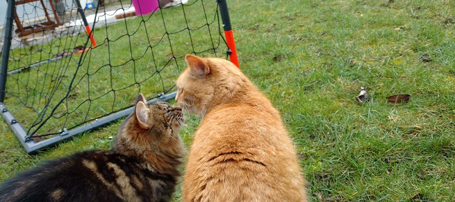 Deux chats dans un jardin