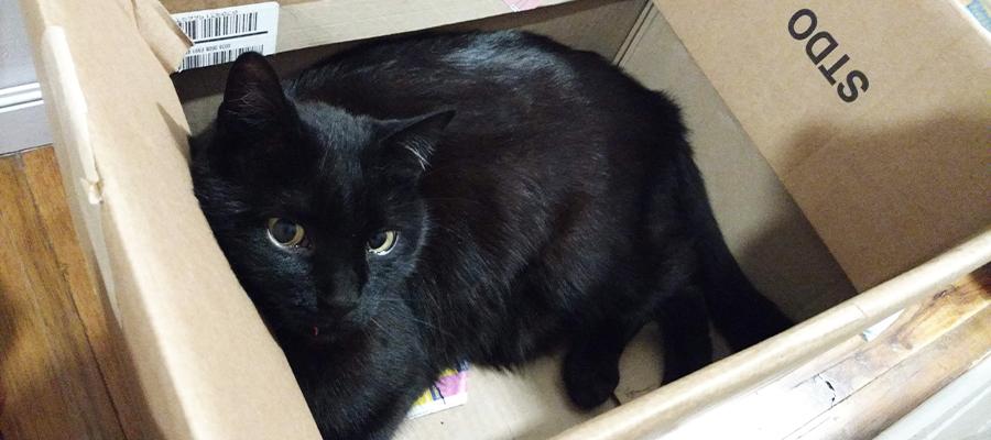 Chat noir allongé dans un carton
