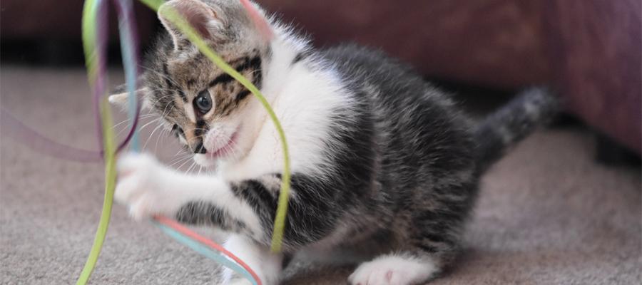Chaton qui joue avec des ficelles