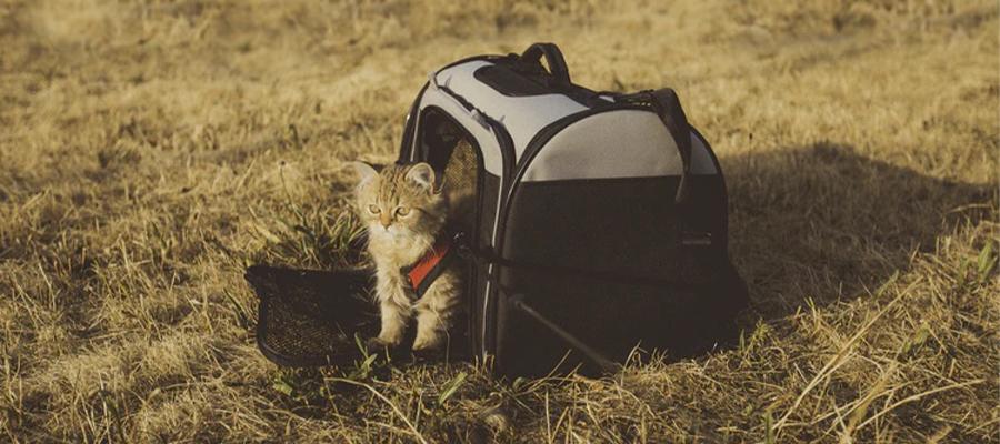 Petit chat dans champs avec son sac