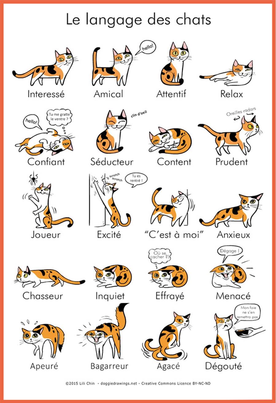 BD sur le langage des chats