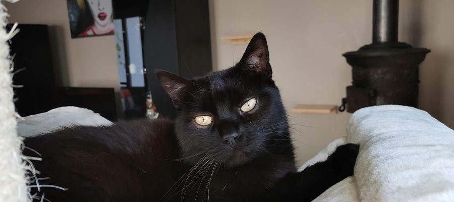 Chat noir allongé sur un hamac