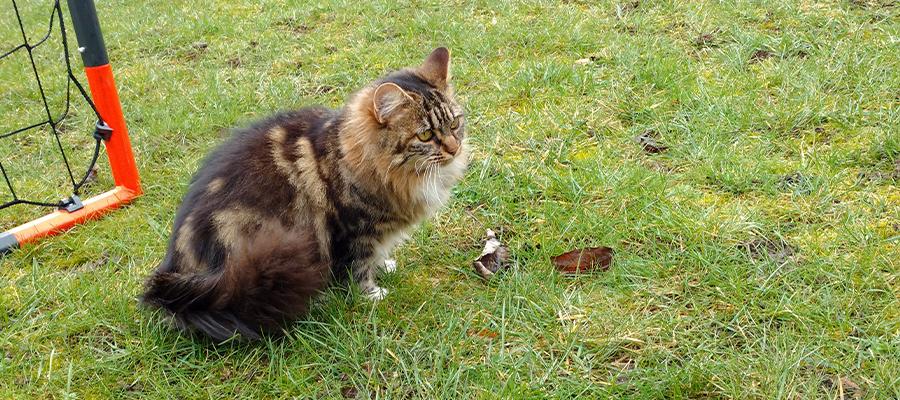 Chat tigré assis dans l'herbe