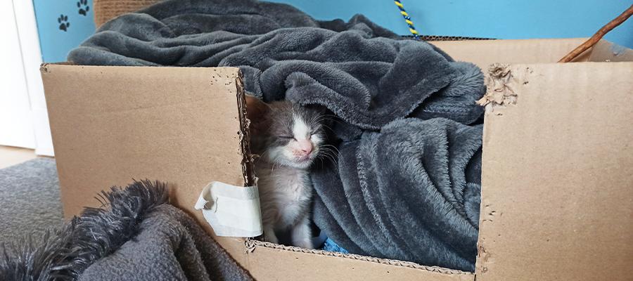 Chaton dormant dans une boîte en carton