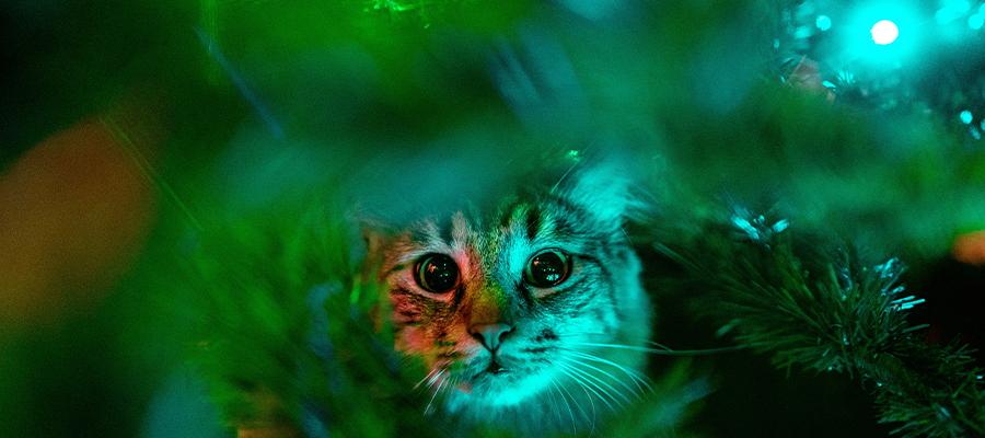 Chat dans un sapin