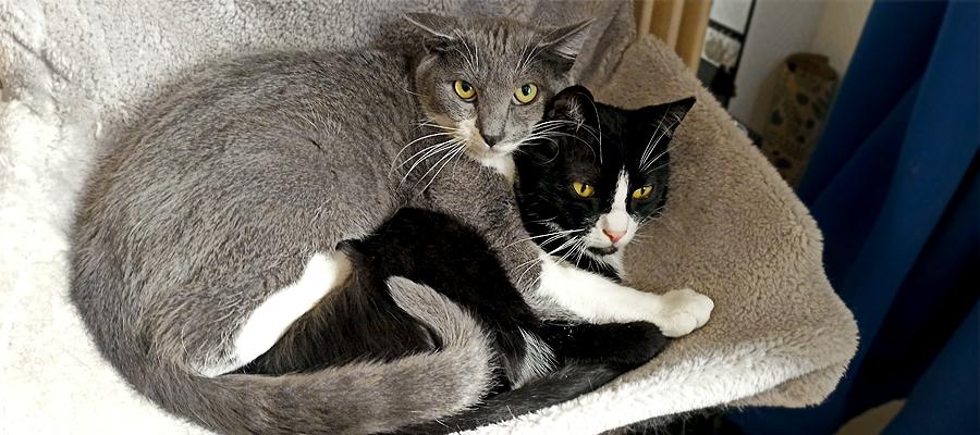 Deux chats allongés