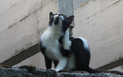 Mon chat se gratte