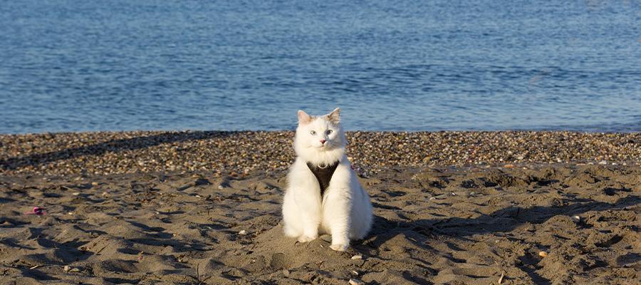 Chat sur la plage