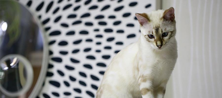 Un joli chat en train d'observer dans le salon