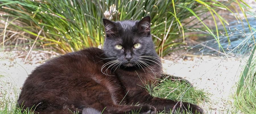 Chat noir dans un jardin