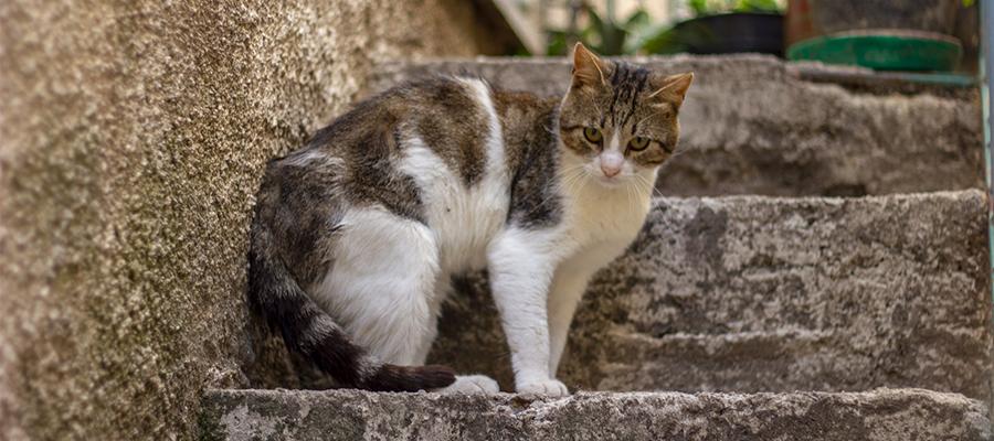 Un chat gris et blanc sur un escalier qui fait le dos rond