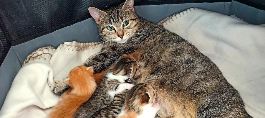 Chatte et ses petits
